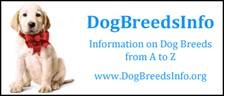 dog_breed_info.jpg